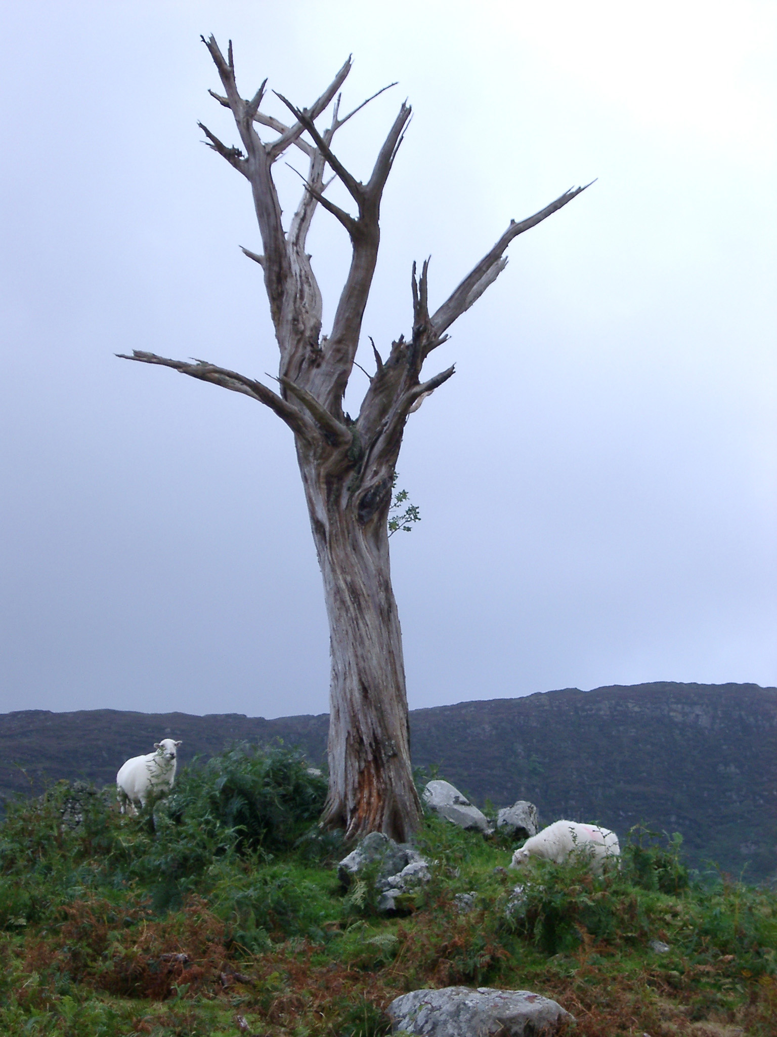 Free Dead Tree Stock Photo - FreeImages.com