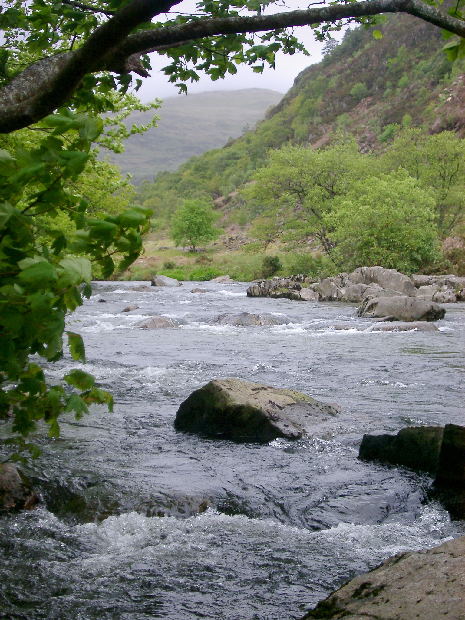 River with melt water flowing through a steep mountain valley forested with green leafy deciduous trees in Wales