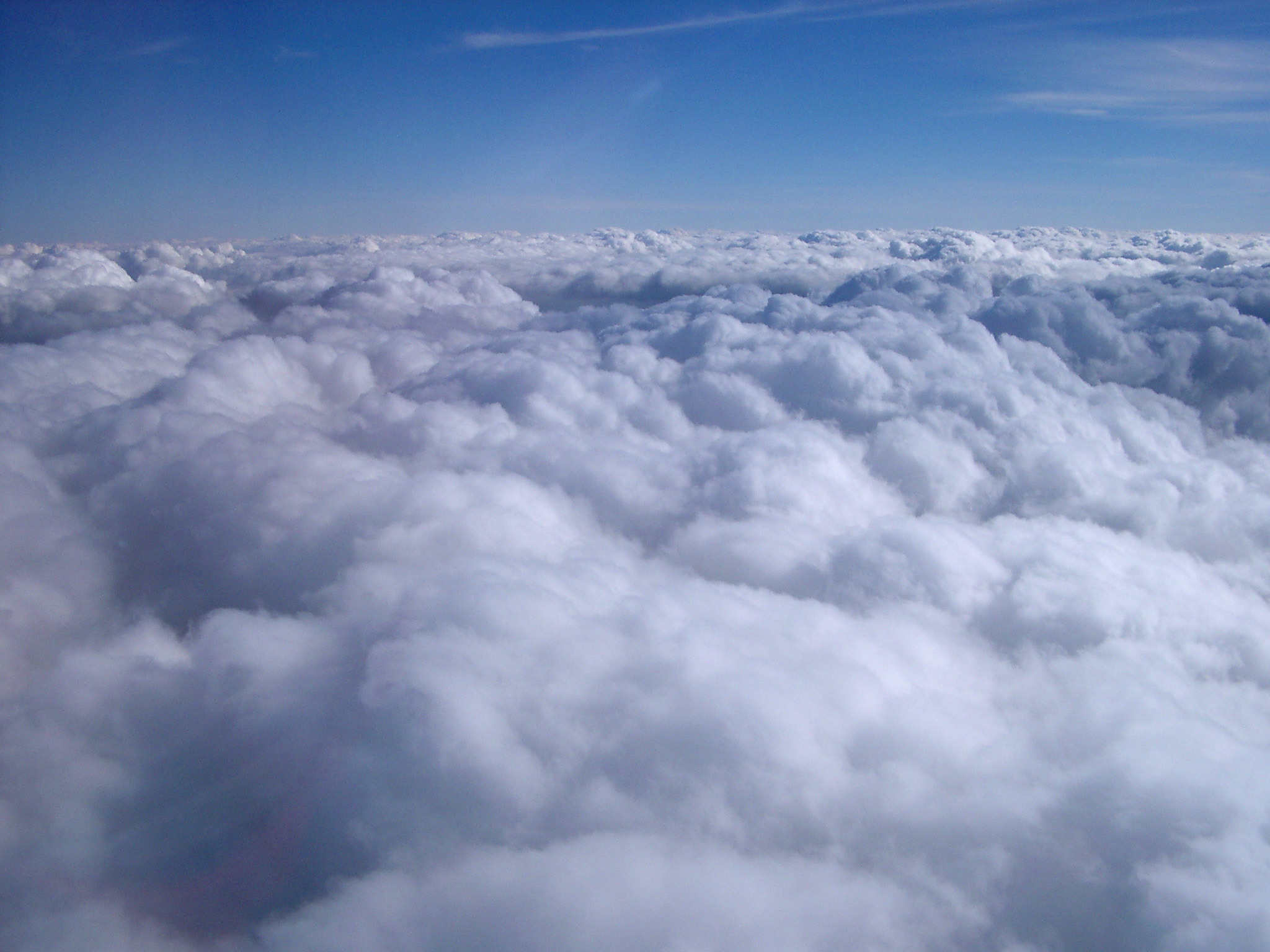 View from an aircraft above a dense layer of white fluffy clouds to clear blue sky overhead