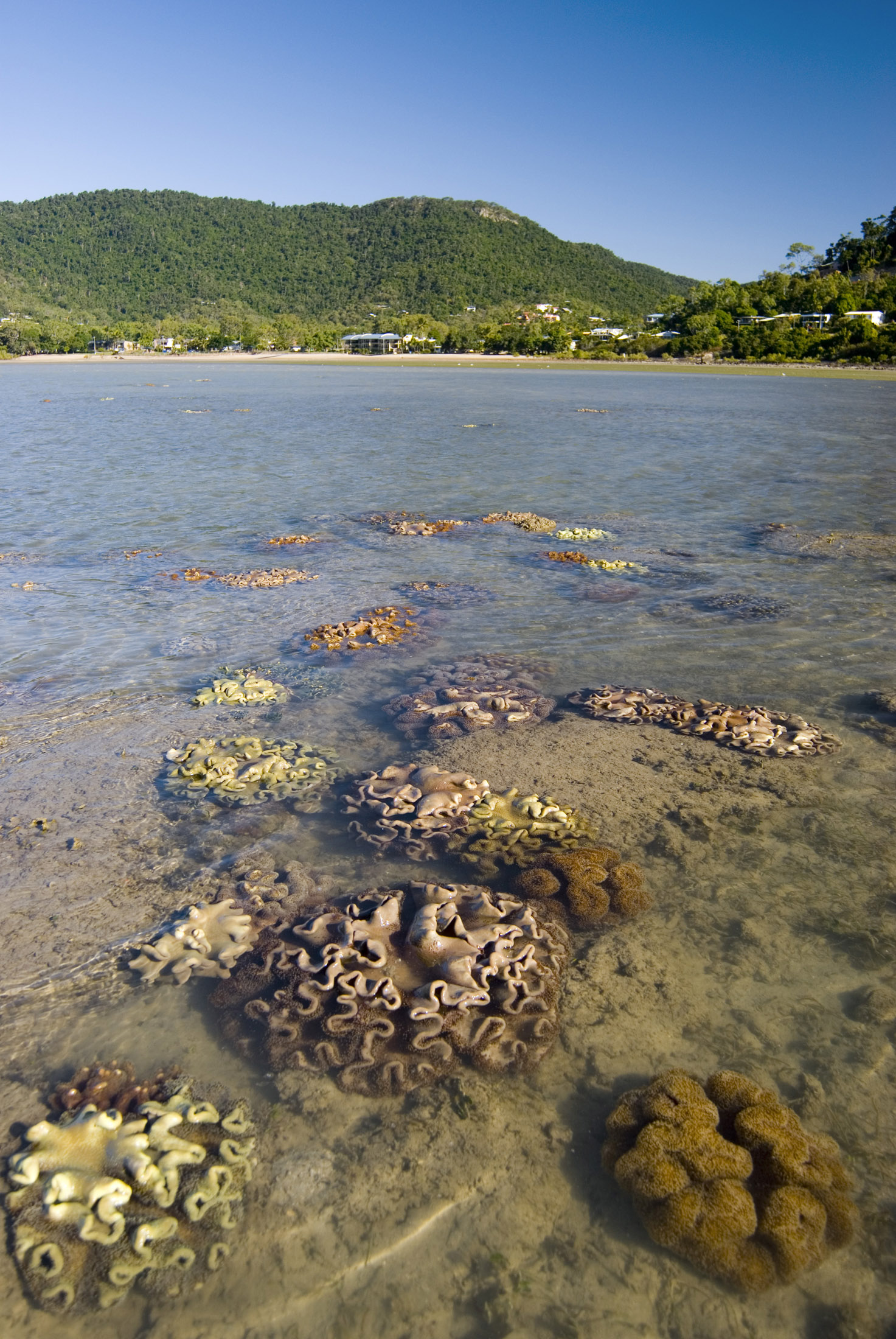 corals in shallow tropical water just off shore at low tide