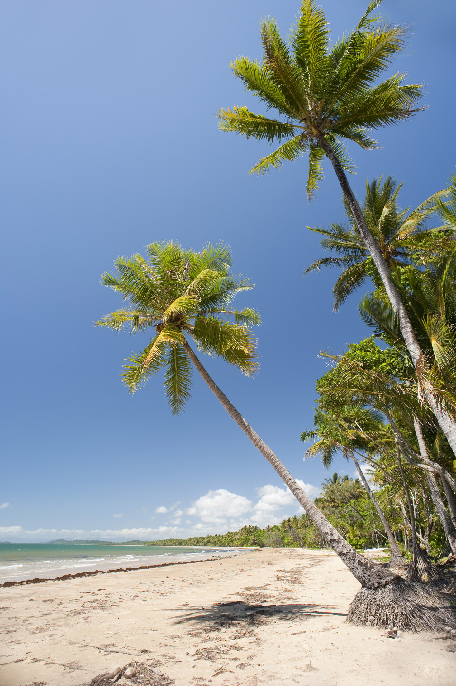 lines of coconut palms growing on the side of a tropical beach