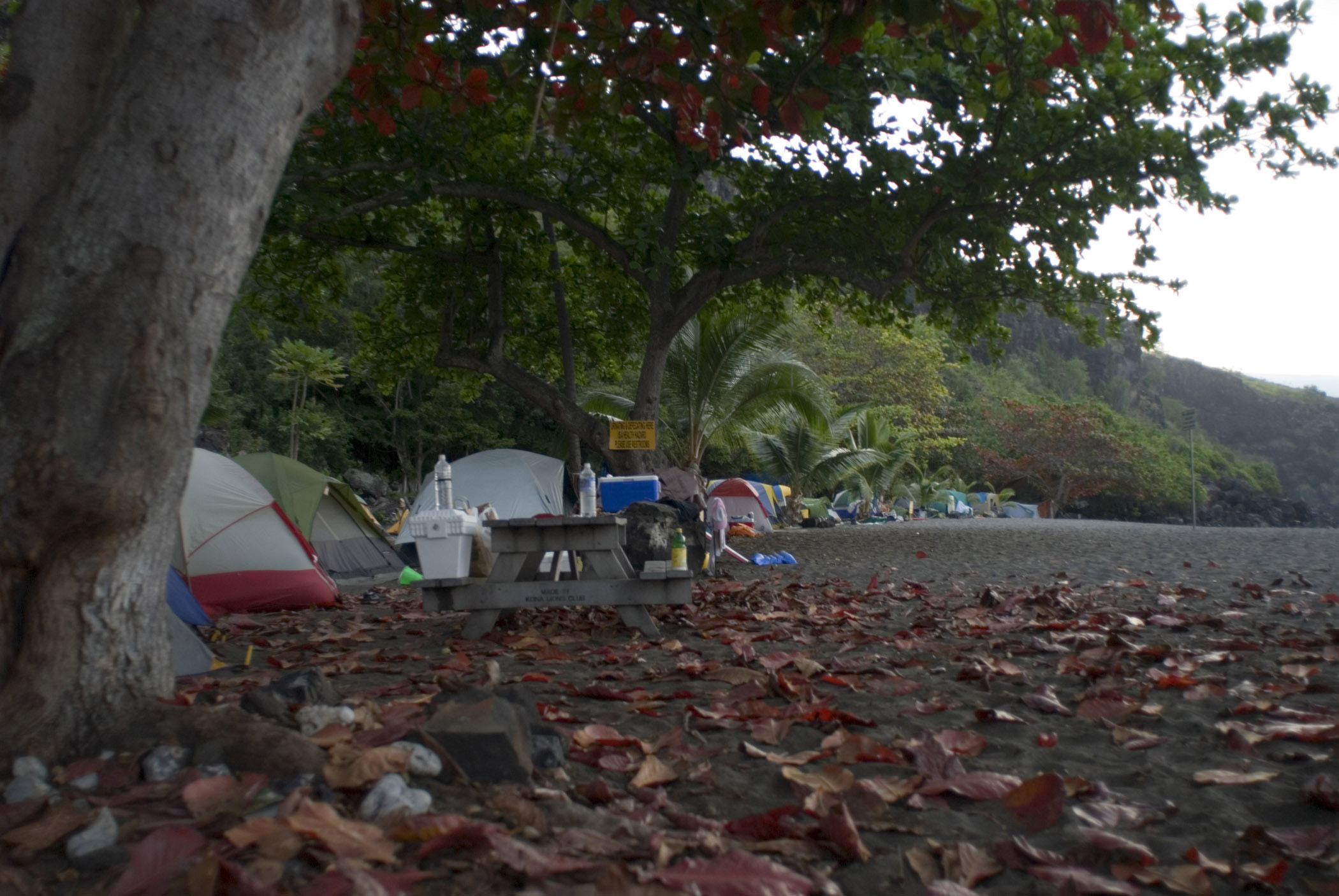 Tourists with their Camp Tents Under Huge Trees at Ho'Okena Beach Park in Hawaii
